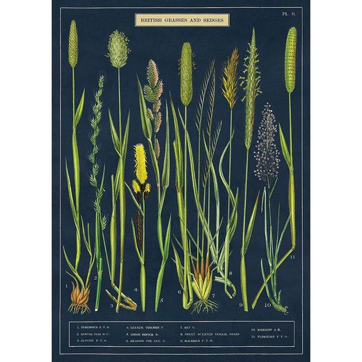 Juliste Cavallini - Brittish grasses and sedges