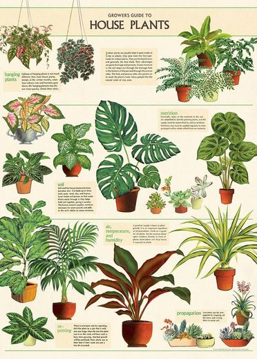 Juliste Cavallini - House Plants