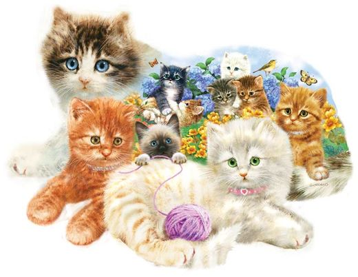 Palapeli SunsOut - A Litter of Kittens (1000 palaa)